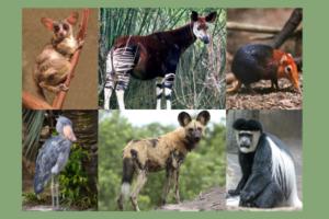 10 increibles animales de africa