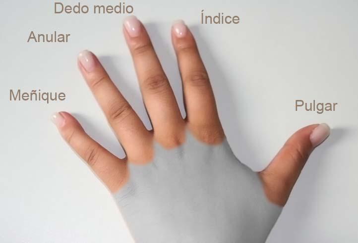 foto detallada con nombres de cada dedo