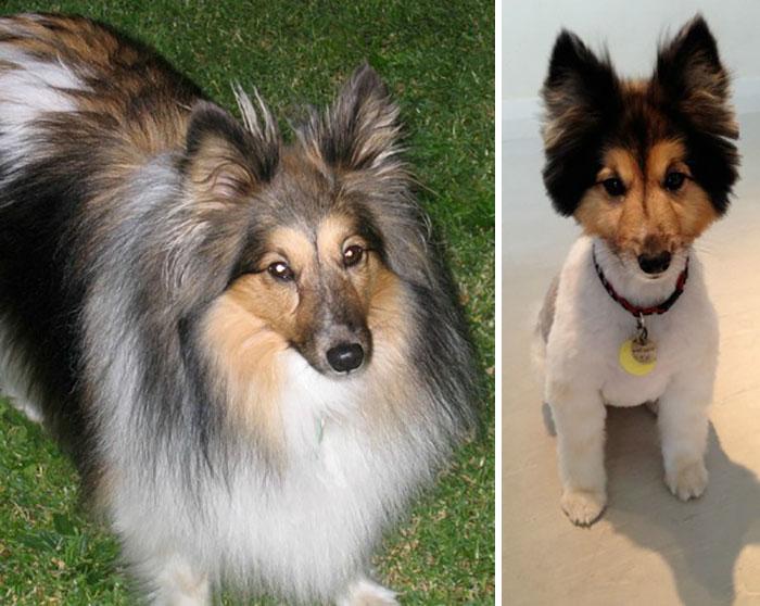 foto antes y después peluquería de perros
