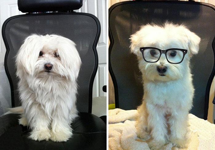 foto antes y después peluquería de perros 16