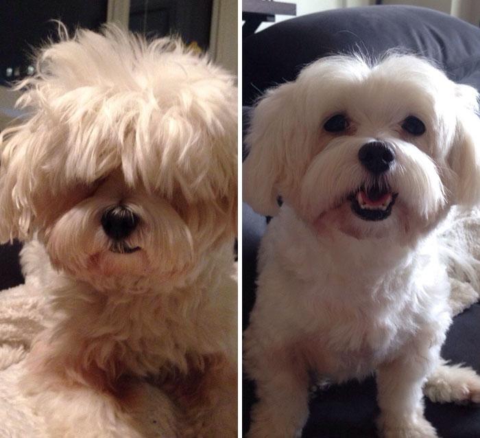 foto antes y después peluquería de perros 2