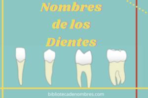 nombres de los dientes